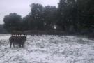 nievetentudia-012